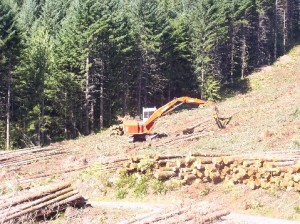 logging pictures 006